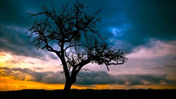 Výzva na odstránenie a okliesnenie stromov a iných porastov